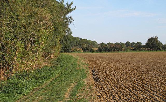 Footpath along Strawberry Wood, Navestock