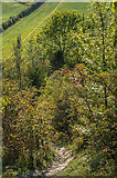 TQ2352 : On Mount Hill by Ian Capper