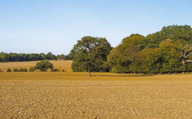 Tilled field, Navestock Side