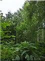 TF0820 : High summer undergrowth by Bob Harvey