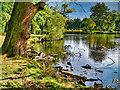 SJ7387 : Dunham Massey, Smithy Pool by David Dixon