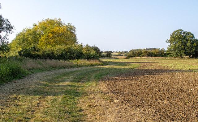 Field margin, tilled land, Kelvedon Hatch