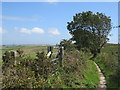SY6187 : South Dorset Ridgeway near Dorchester by Malc McDonald