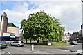 SE3055 : Chestnut Tree on Roundabout by N Chadwick