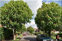 TQ5841 : Chestnuts on Chestnut Avenue by N Chadwick