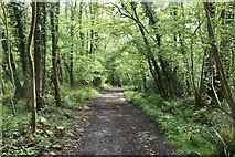 TQ5942 : Footpath, Broke's Wood by N Chadwick