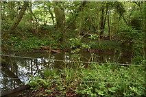 TQ5942 : Small pond, Broke's Wood by N Chadwick