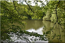 TQ5942 : Large pond, Broke's Wood by N Chadwick