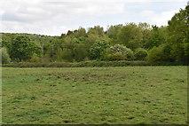 TQ5942 : Barnett's Wood Reserve by N Chadwick