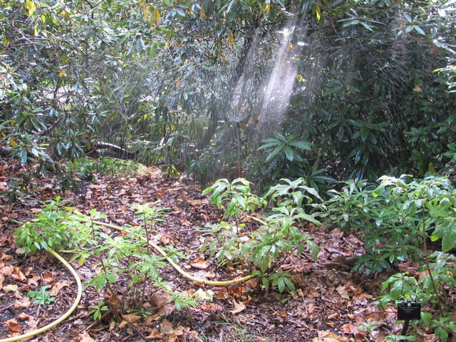 Irrigation above rhododendron dell, Kew Gardens