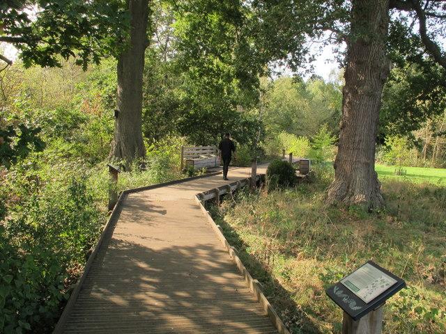 Boardwalk in woodland conservation area, Kew Gardens