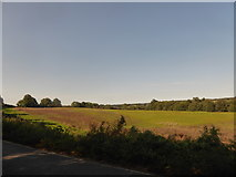 TM0035 : Constable, that's a Gainsborough: field on the Tendring Hall Estate by Basher Eyre