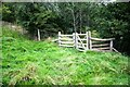 NY5929 : Footpath into Hag Wood by Roger Templeman