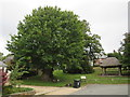 SY7994 : Tolpuddle Martyrs' tree by Malc McDonald