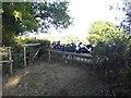 TQ4638 : Calves near Chantlers Farm by Marathon