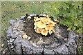 TF0820 : A rotting treestump by Bob Harvey