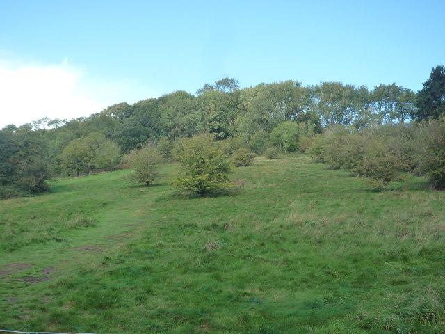 Midsummer Hill