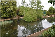 TQ5840 : Pond, Grosvenor Park by N Chadwick