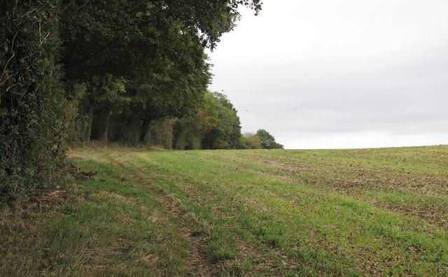 Footpath on field boundary near Day's Lane, Doddinghurst