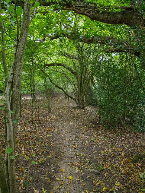 Footpath near Peartree Green, Doddinghurst