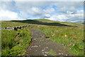 SD7082 : Green lane above Blea Gills by Andy Waddington