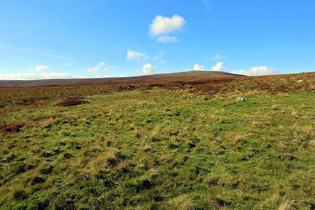 Limestone grassland at Long Mea