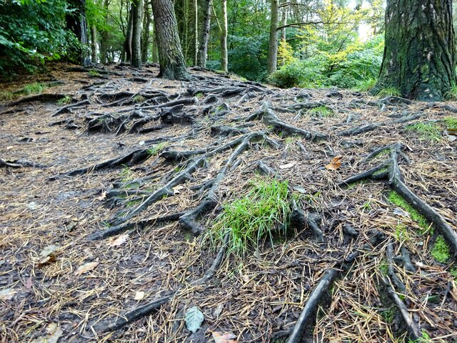 A rooty trail