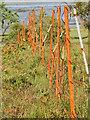 NM6467 : Rusty fence, Camas Clachach by Mick Garratt