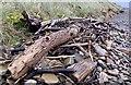 SS7881 : Driftwood on a wet beach by Alan Hughes