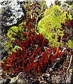 NX1894 : Colourful Moss by Anne Burgess