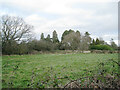 SP1573 : Conifers in the grounds of former Aylesbury House Hotel, Hockley Heath by Robin Stott
