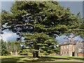 ST2885 : Cedar of Lebanon, Tredegar House Gardens  by Robin Drayton
