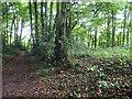 SO8813 : Boundary Stone, track, Upton St Leonards by Mr Red