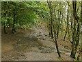 SE2244 : Muddy footpath through Chevin Forest by Stephen Craven