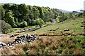 SD8489 : View of Widdale Beck by Luke Shaw