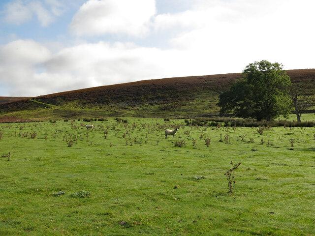 Rough pasture below Shittlehope Edge