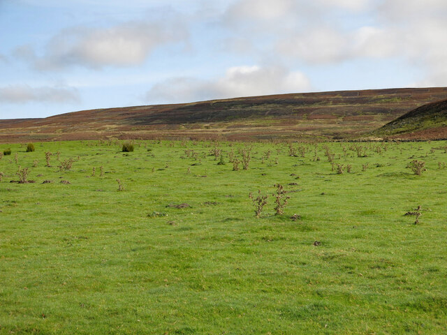 Rough pasture below Saugh Sike Head