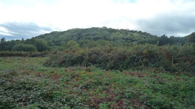 Midsummer Hill (Viewed from Swinyard Hill)