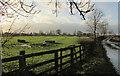 SE3261 : Ridge and furrow, Brearton by Derek Harper