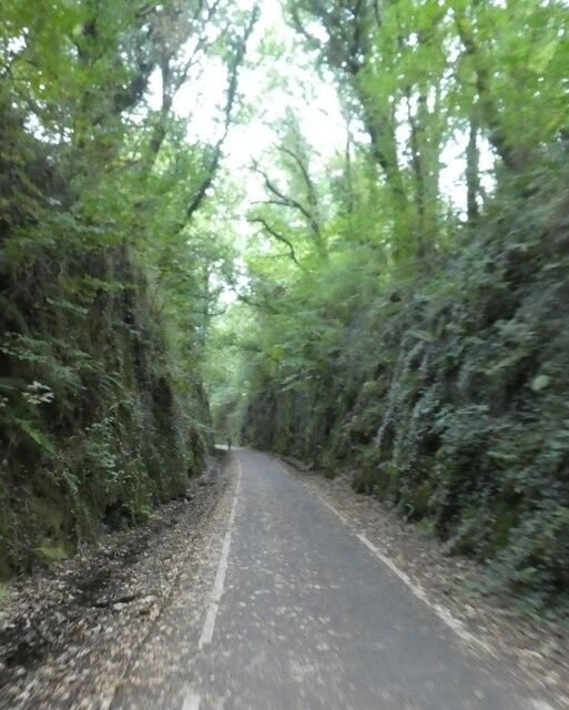 Cutting near Bickleigh on the West Devon Way
