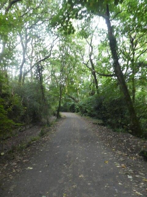 West Devon Way in woodland near Leigham