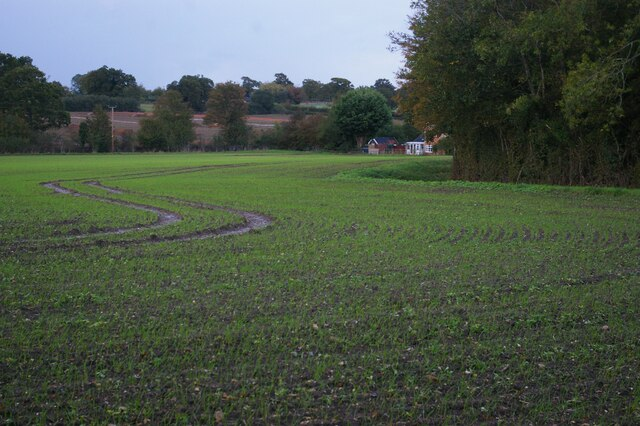 Newly-sown field along Hawthorn Road
