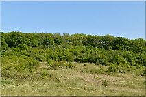 TQ5943 : Appletree Wood by N Chadwick