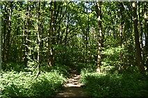 TQ5943 : TWCW, Minepit Wood by N Chadwick