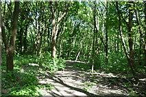 TQ5944 : Tunbridge Wells Circular Walk by N Chadwick