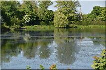 TQ5945 : Lake, Somerhill Park by N Chadwick