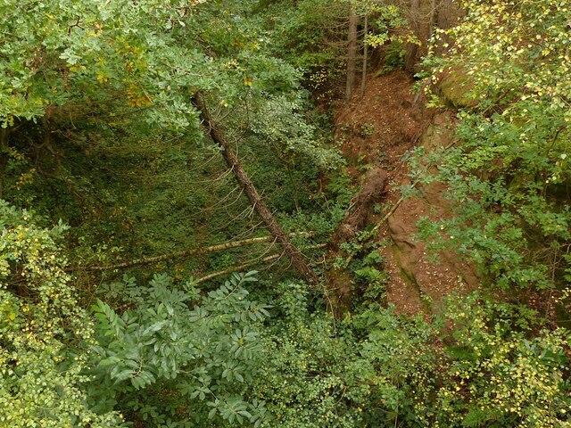 Bridge in Sansom Wood – 3