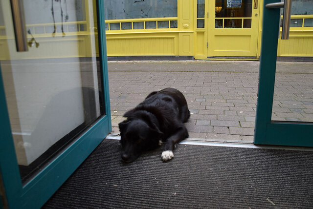 Patient dog, Omagh