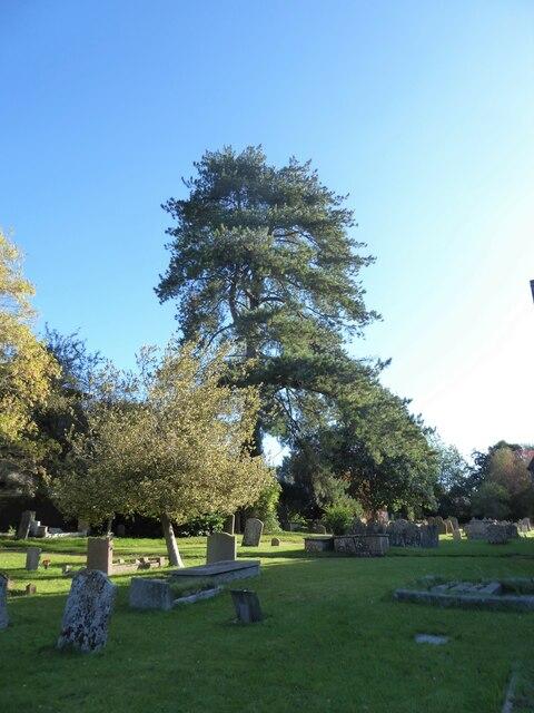 Holy Cross, Ramsbury: churchyard (a)