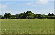 TQ6245 : Farmland, Tudeley by N Chadwick
